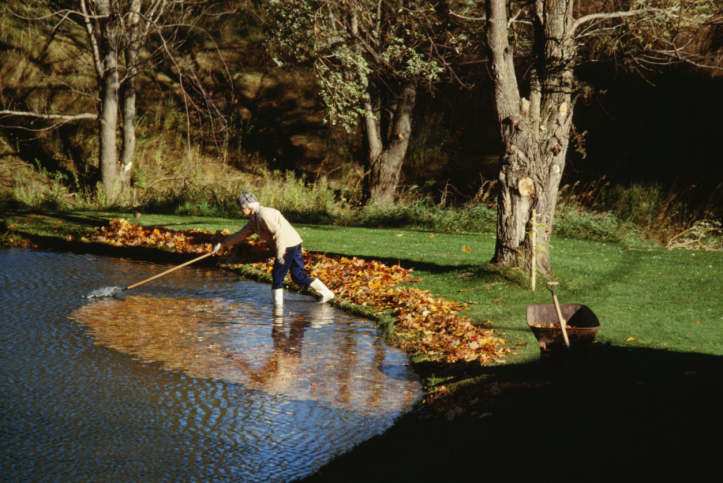 Pond services for Pond cleaning services